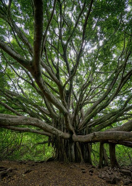 """Banyan Tree"""