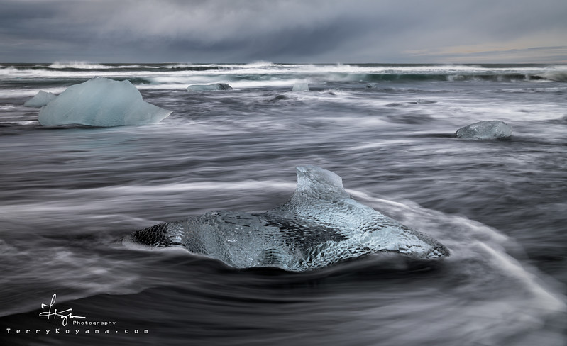 Iceland Predator