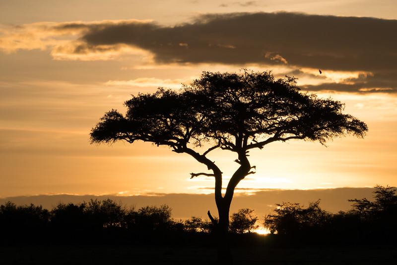 """""""Sunrise in the Mara"""""""