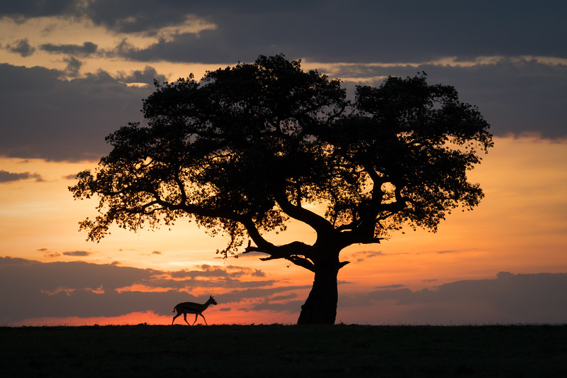 """Gazelle at Sunset"""