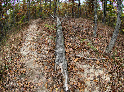 Wooded Trails with  Fallen Tree