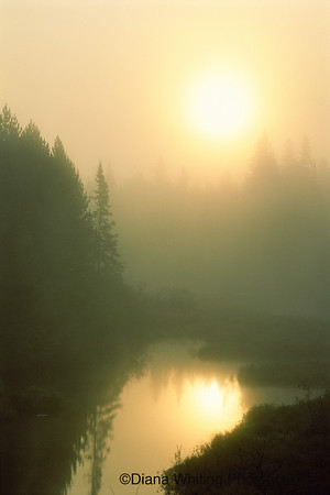 Algonguin Provincial Park Canada