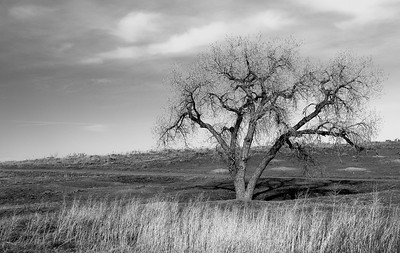 Cottonwood 2