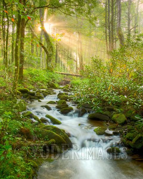 Rowan's Creek, Cades Cove, Great Smoky Mountains National Park