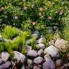 SEA ROSE, BOULDERS; NOVA SCOTIA