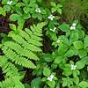 FOREST DETAIL, CAPE BRETON, NOVA SCOTIA
