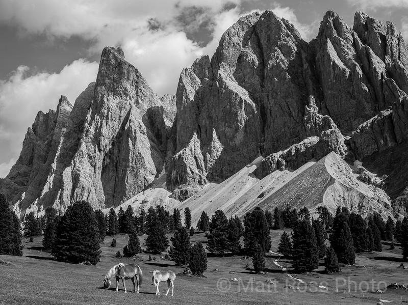 HORSES, OLDE MOUNTAIN GROUP