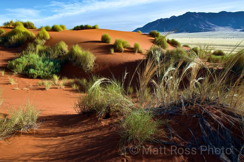 RED DUNES, GRASS, NAMIB-NAUKLUFT NATIONAL PARK