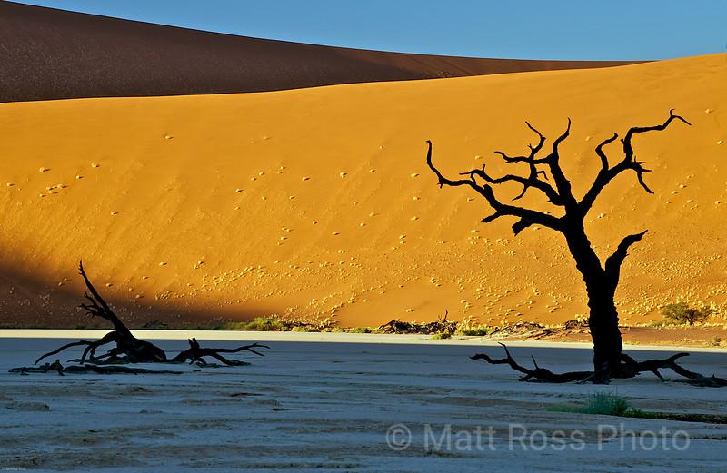 CAMEL THORN TREES, DEADVLEI, NAMIBIA