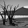 DEAD VLEI THORN TREES