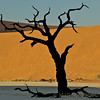 THORN TREE AGAINST RED DUNES, DEAD VLEI, NAMIBIA