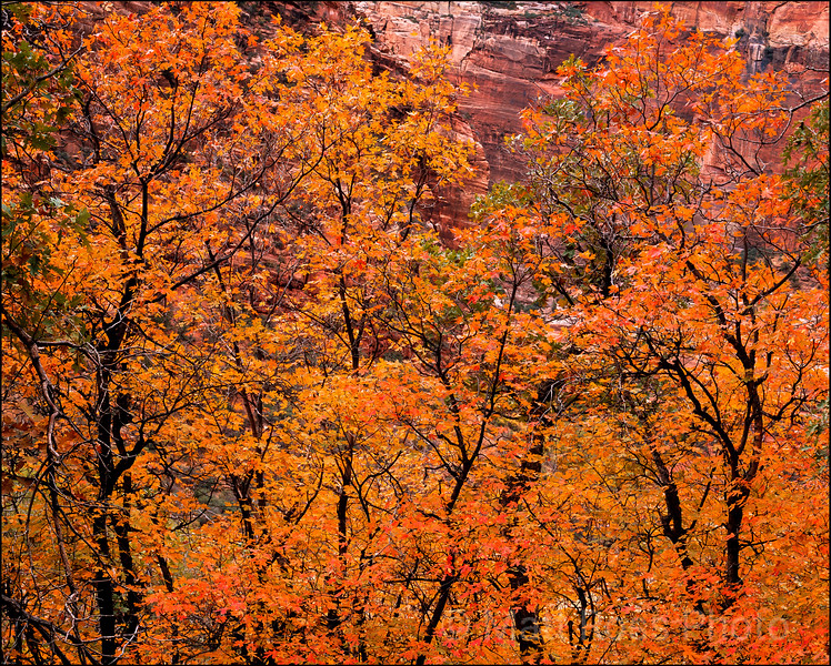 Zion Bench, Fall Color