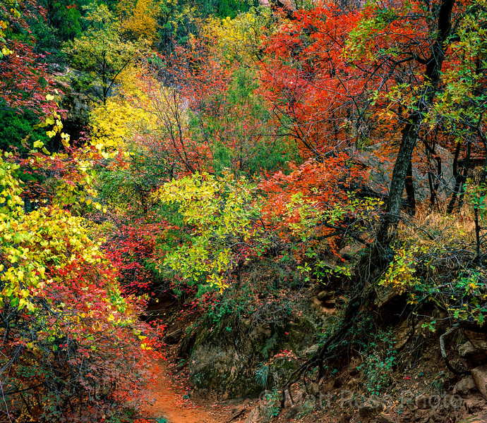 TRAIL TO EMERALD POOLS, ZION