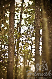 Image of tall trees found in the woods Shot with the Lensbaby Composer with Edge 80 optic  © Copyright Hannah Pastrana Prieto
