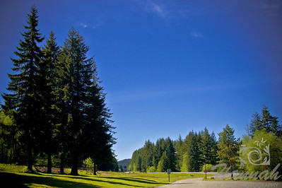 Landscape view of a park with pine trees Oregon  © Copyright Hannah Pastrana Prieto