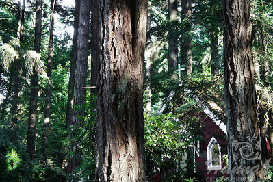 "A view of St. Anne's Chapel behind the tree trunks shot taken at ""The Grotto"" in Portland, Oregon This mini chapel, which was built in 1934 honors St.Anne who is the mother of Mary.  It is the house of numerous Madonna paintings from many countries.  © Copyright Hannah Pastrana Prieto"