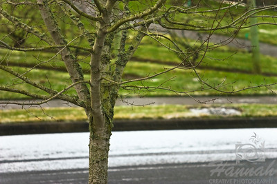 Start of Snow. An image of a winter tree covered with moss and a thin snow on the road.  © Copyright Hannah Pastrana Prieto