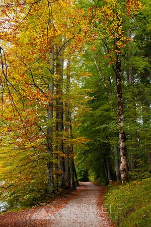 Early Autumn in Schwangau