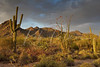 Sonoran Desert at Sunset 5288