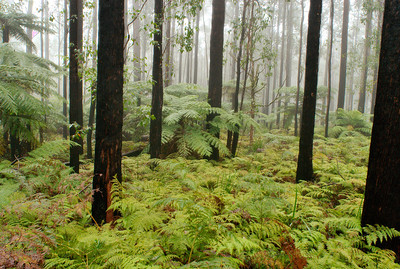 Forest scene in the Oxley Wild Rivers National Park, NSW.