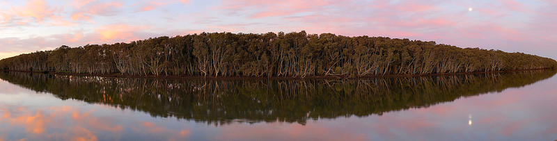 Hunter River Mangroves, Hexham, NSW