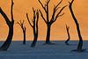 """Sunrise on the Vlei"""