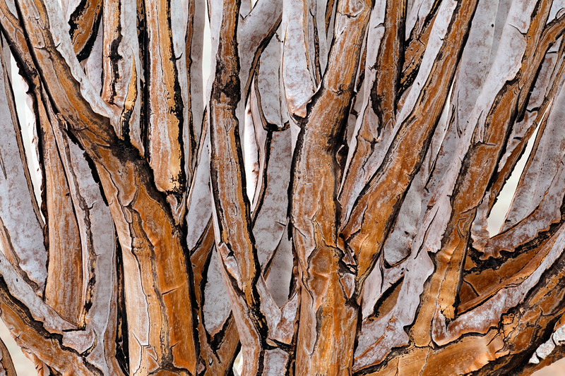 """""""Quiver Tree Abstract"""""""