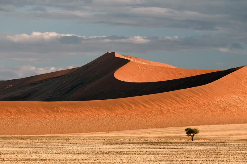 """""""Dune and Tree"""""""