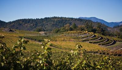 mountain vines