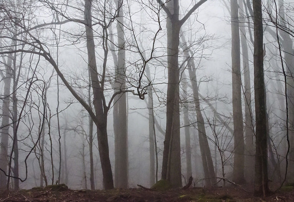 A late afternoon rolling fog through the barren trees seemingly creates an eerie scene. - Great Smoky Mountains National Park