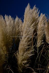 Reedlands