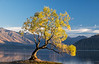 """Wanaka First Light"""
