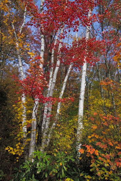 """Vermont Red"""