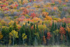 """""""Autumn Mist"""""""