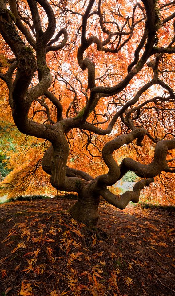 """Orange Canopy"""