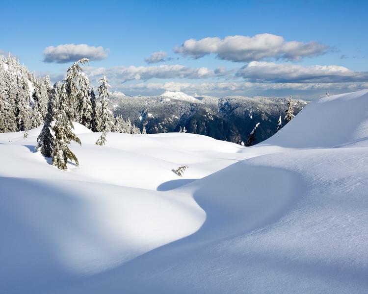 """""""Winter's Grace"""""""