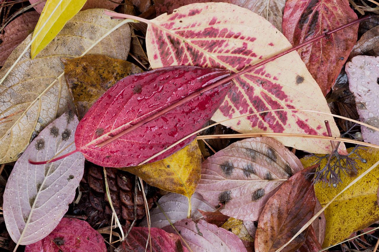 """""""Autumn Delight"""""""