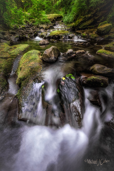 Forrest Stream, Oregon-2
