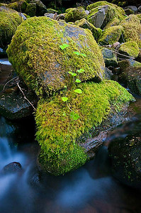 Creek on trail to Sol Duc Falls Olympic National Park, Washington