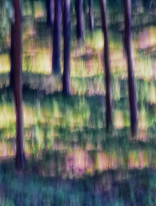 Monet's Forest