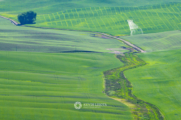 Crop dusting over the Palouse wheat fields