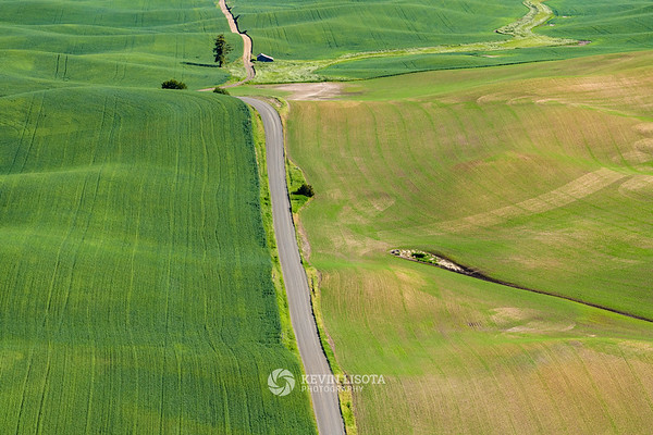 Road through the fields of the Palouse