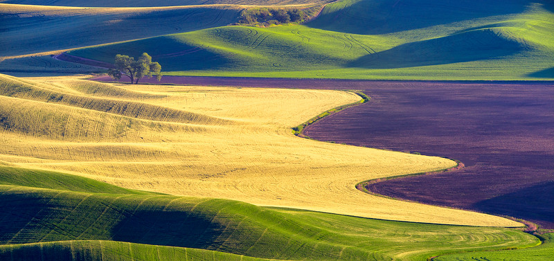 Purple Waves of Grain; yellow and green one, too!