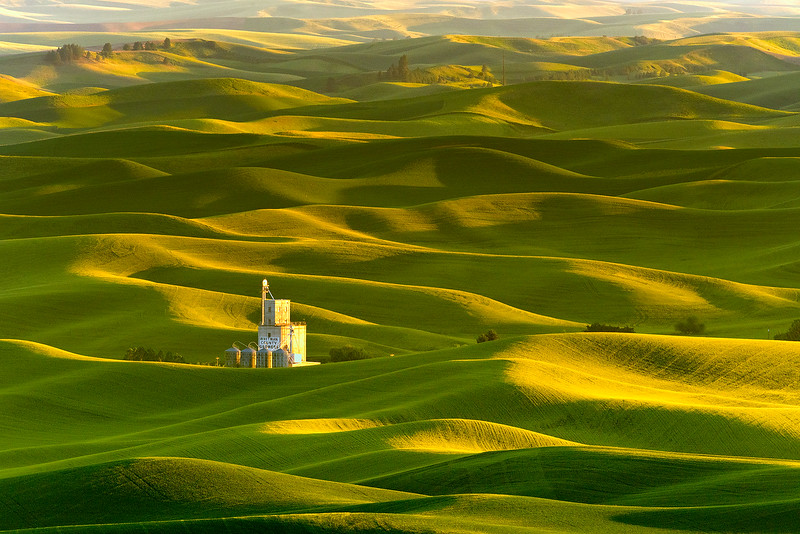 Whitman Growers in the Palouse