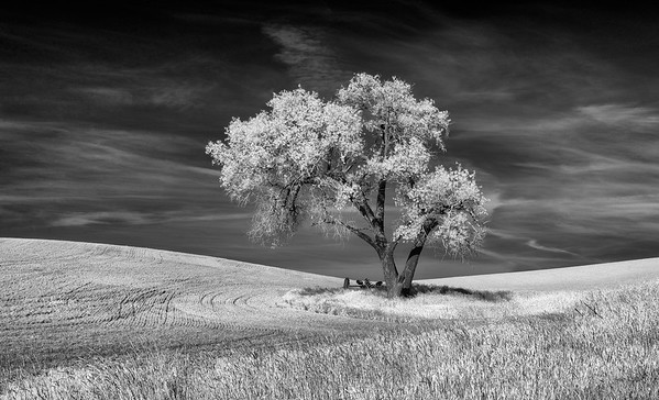 Two visiions: one tree_infrared