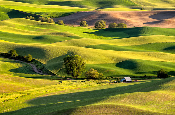 Late-afternoon magic in the Palouse