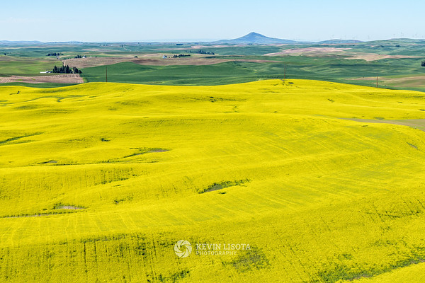 Canola fields and Steptoe Butte in the Palouse