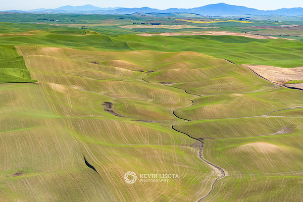 Creek runs through the Palouse crop fields