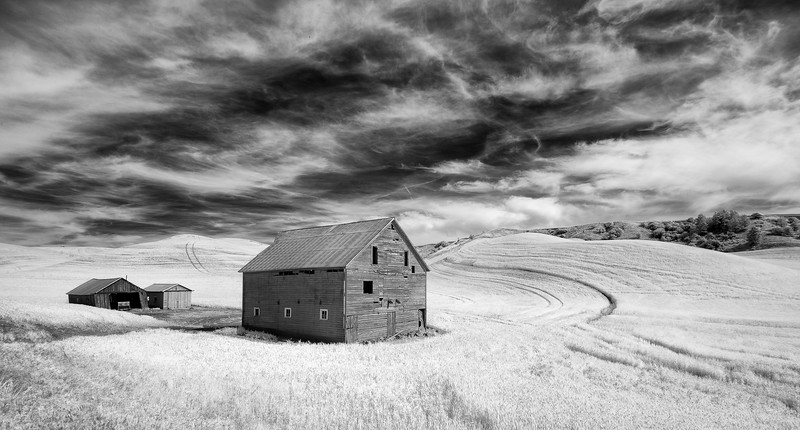 Old Barn standing guard over fields of wheat in the Palouse