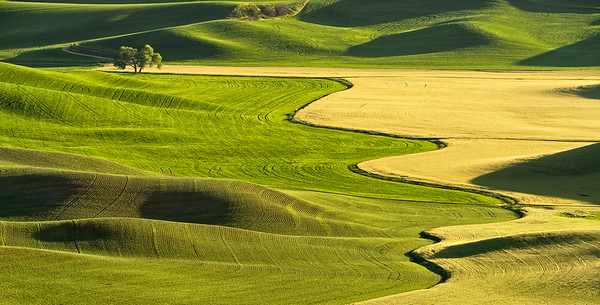 Late afternoon in the Palouse. Note the difference between 2015 and 2016!
